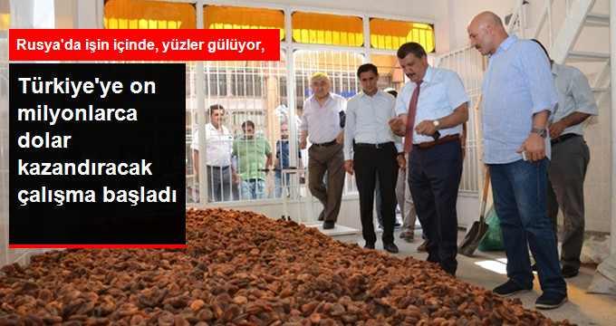 turkiye-ye-on-milyonlarca-dolar-kazandiracak_x_8410072_1940_z5[1]