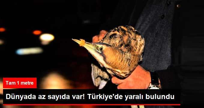 dunyada-az-sayida-var-turkiye-de-yarali-bulundu_x_9094737_1550_z11